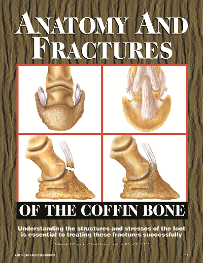 Anatomy And Fractures